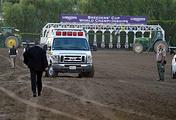 Приезд ветеринаров после травмы Монгольского Жениха