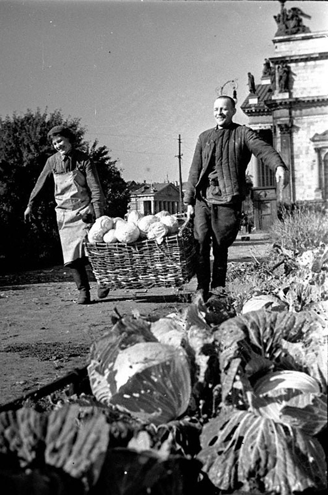 Работники Н-ского госпиталя Е.Скарионова и М.Бакулин за сбором капусты. 1942 г