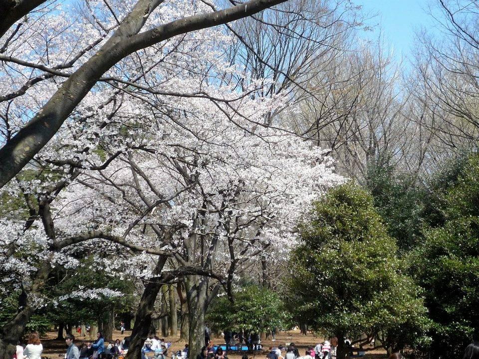 Ведомство ежедневно выдает сводки о продвижении фронта цветения