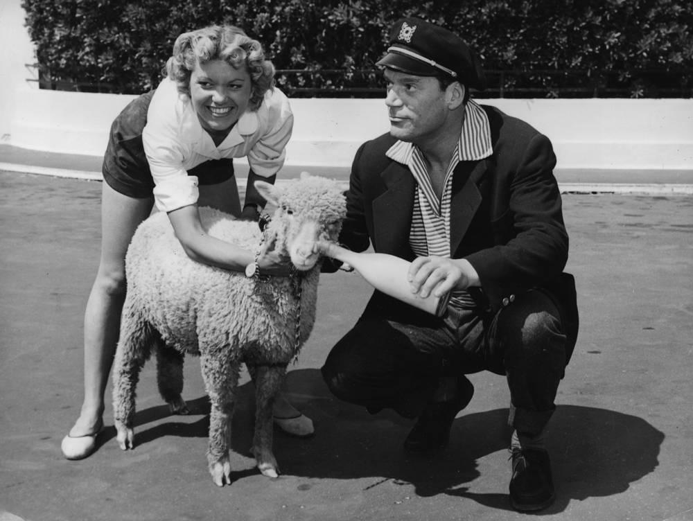 Эдди Константин и Арлетт Патрик кормят овечку, 1955 год