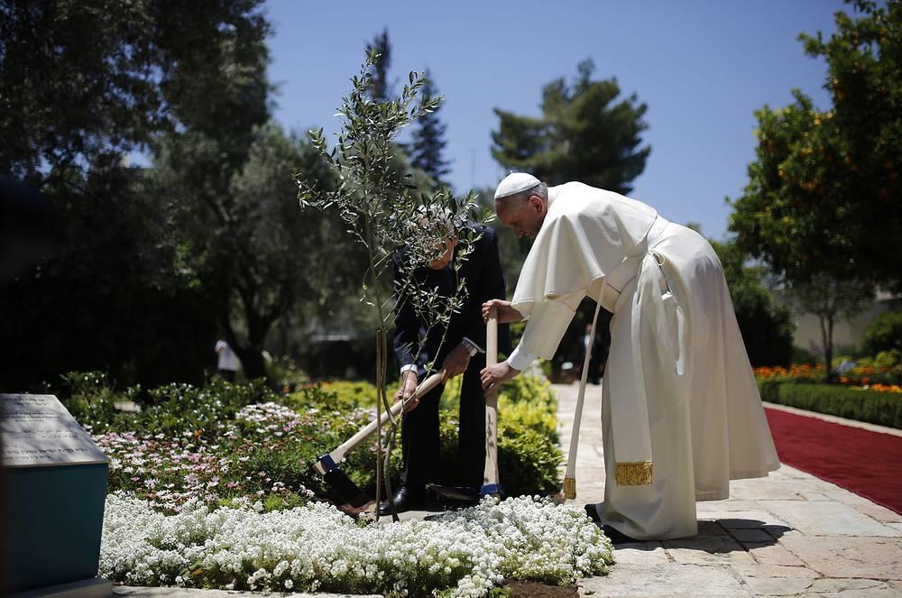 Папа римский Франциск и президент Израиля Шимон Перес вместе сажают оливковое дерево после встречи в президентской резиденции, 26 мая