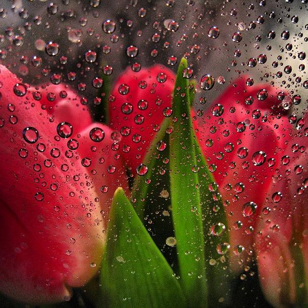 """Премьер любит поздравлять своих подписчиков с государственными праздниками. Снимок с тюльпанами - поздравление к 8 Марта в 2013 году, 15 тыс. """"лайков"""""""