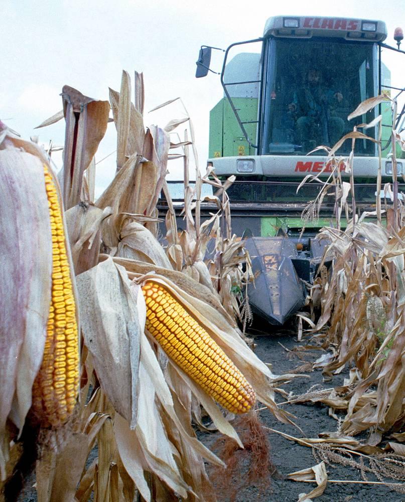 Среди продуктов, поставляемых Венгрией в РФ, - кукуруза