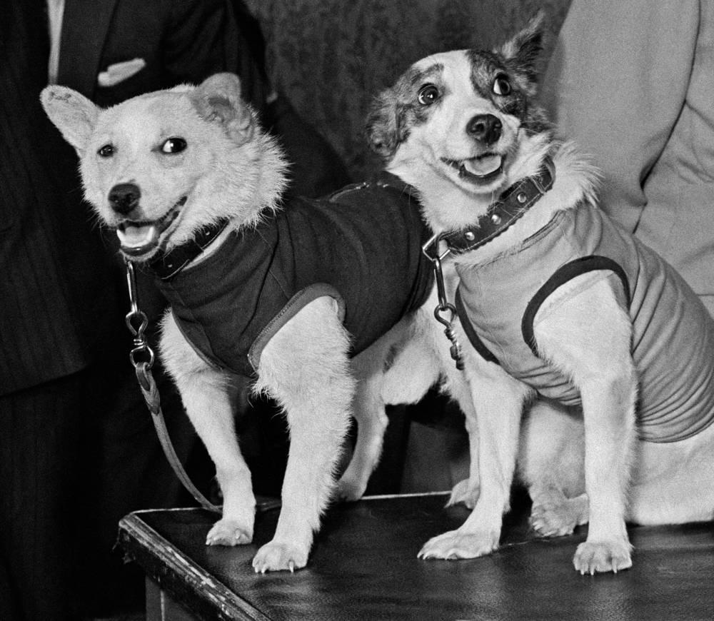 Собаки-космонавты Белка и Стрелка, 1960 год