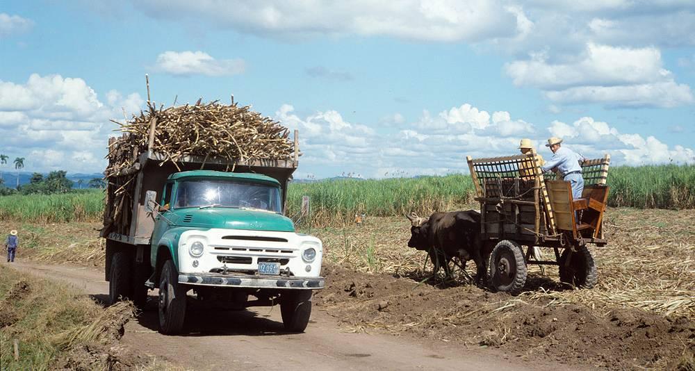 Куба. Советские автомобили ЗИЛ на уборке сахарного тростника. Фото ИТАР-ТАСС/ Семен Майстерман