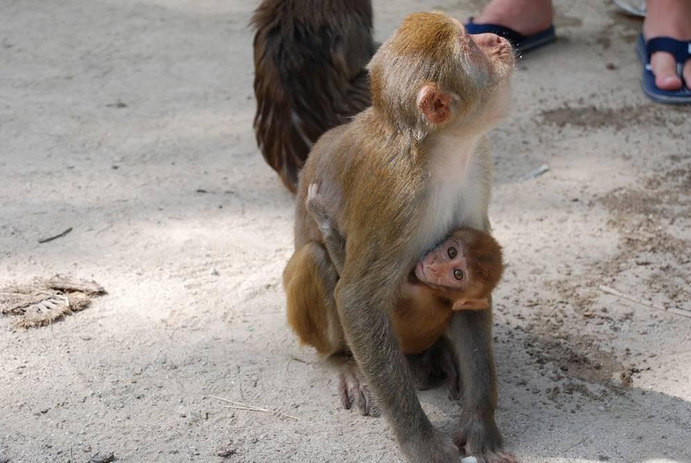 Семья обитателей Острова обезьян
