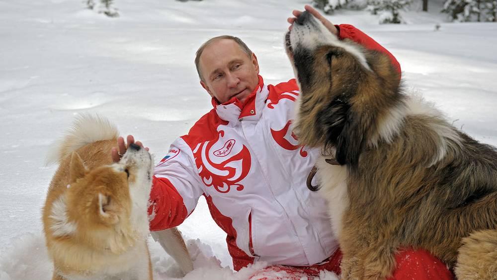 Владимир Путин со своими собаками болгарской овчаркой Бафaи и акита-ину Юмэ. Фото ИТАР-ТАСС/ Алексей Дружинин