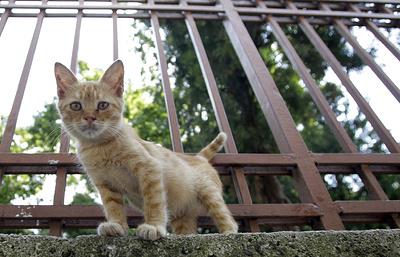 Исследование: первые домашние кошки появились на территории современной Турции