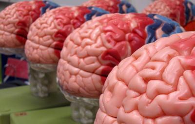 Новый вид мозговых имплантатов тестируют в Гарварде