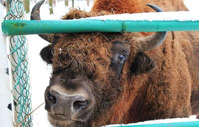 Популяции диких животных в Канаде за полвека сократились на 83%