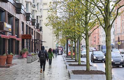 Три тысячи деревьев высадили в Москве с начала ноября по программе благоустройства