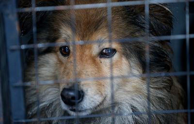 """Фонд """"Дарящие надежду"""" проведет благотворительный сбор корма для приютских животных"""