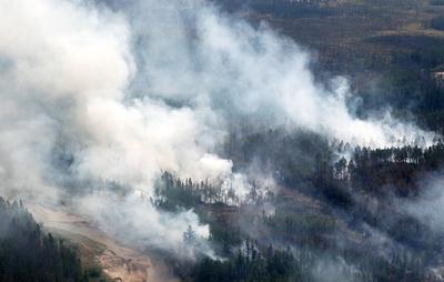 Площадь лесных пожаров в России увеличилась до 110 тыс. га