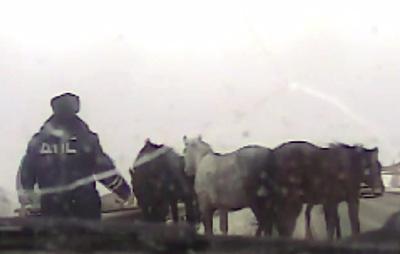 Сотрудники ГИБДД спасли лошадей, выбежавших на автотрассу под Красноярском