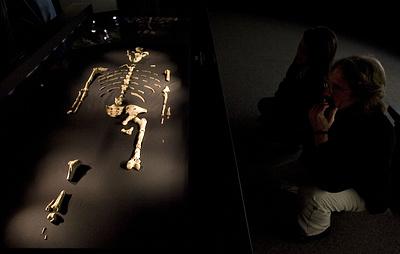 Тайна сроком 3,2 млн лет. Австралопитек Люси могла погибнуть от зубов крокодила
