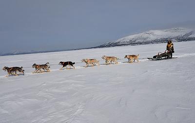 """Гонка """"Берингия"""" на Камчатке продолжила движение после задержки из-за циклона"""