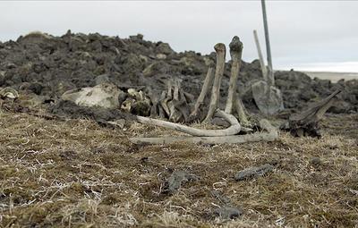 Ученые обнаружили в Якутии обработанный человеком бивень мамонта