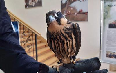 Тамбовские агропредприятия первыми в России начали использовать хищных птиц в сфере АПК