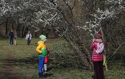 В СК заявили, что работающая в России система позволяет находить 99% пропавших детей