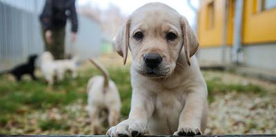 Как выбрать щенка и где искать заводчика: советы кинологов ко Дню собак