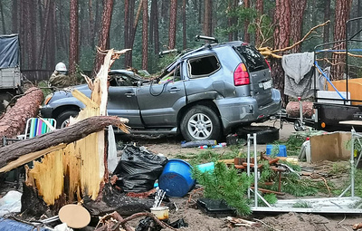 Число пострадавших при падении деревьев в Красноярском крае выросло до пяти