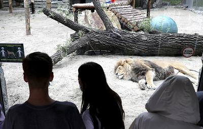 Новосибирский зоопарк планирует получить выплату около 35 млн рублей от властей региона