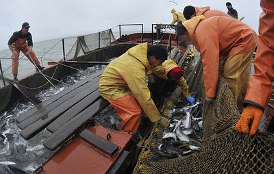 Росрыболовство: добыча сардины и скумбрии на Дальнем Востоке превысила прошлогоднюю