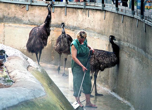 В вольере страусов
