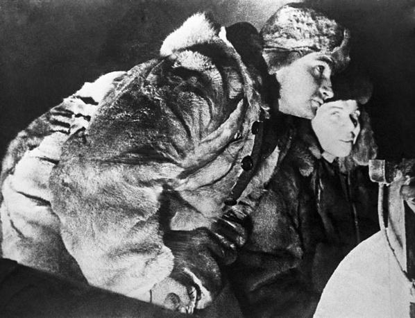 """Дрейф ледокола """"Георгий Седов"""" через арктический бассейн.Капитан ледокола """"Георгий Седов"""" Константин Бадигин. 1937 г."""