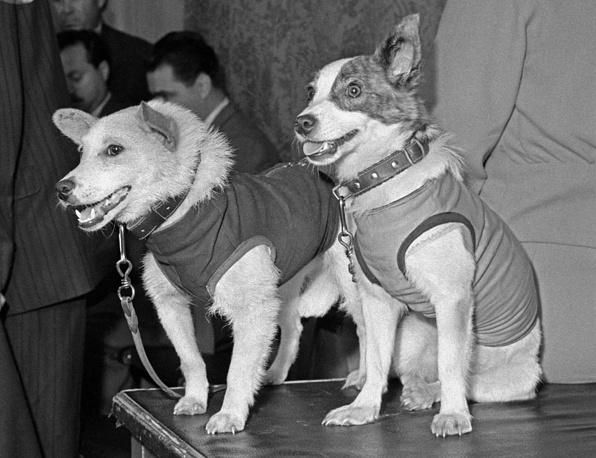 Собаки Белка и Стрелка после возвращения на Землю. 1960 год