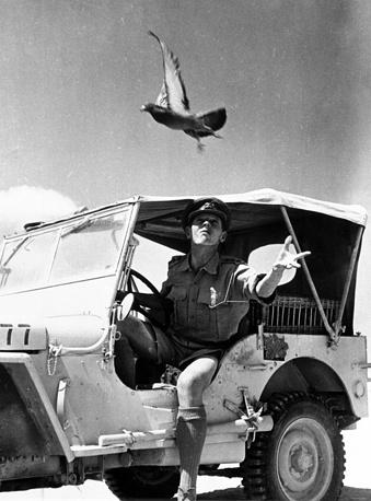 Военная голубиная почта армии США в Египте, 1943 год