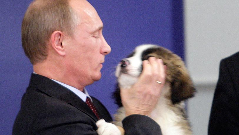 Щенок каракачанской собаки, которого подарил премьер-министр Болгарии Бойко Борисов