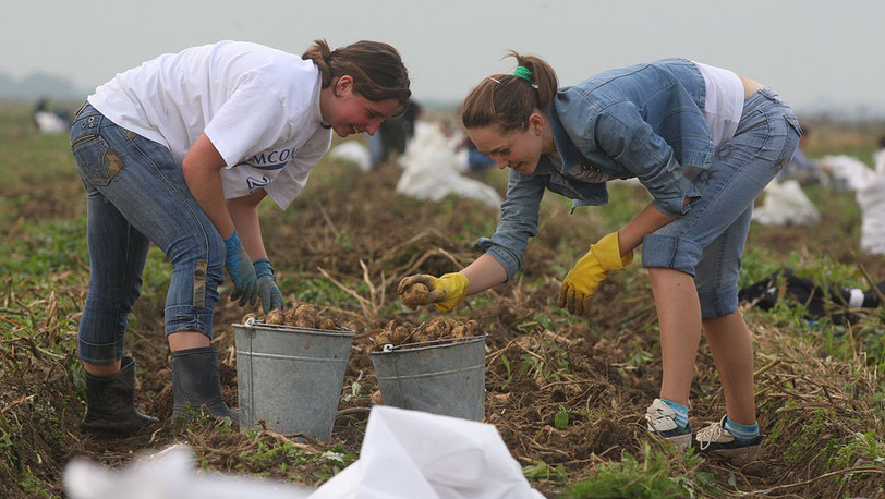 Во время сбора картошки на одном из колхозных полей. 2008 год. Фото ИТАР-ТАСС/ Владимир Смирнов