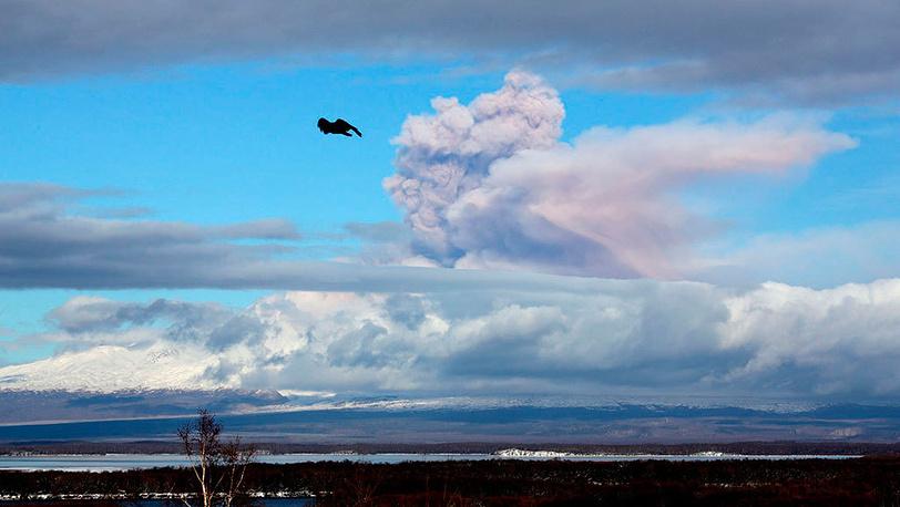 Извержение вулкана Шивелуч. Фото Юрий Демянчук