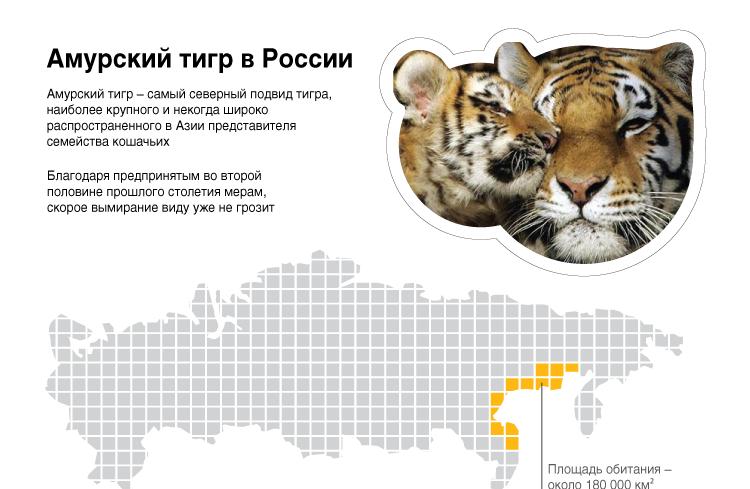 Амурский тигр в России