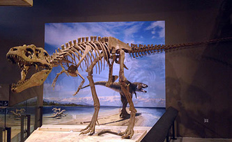 Фото из архива AP Photo/Natural History Museum of Utah, Mark Loewen