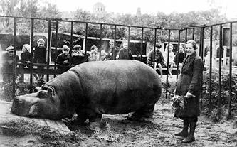 Е.И.Дашина у бегемота по кличке Красавица.1943 г.