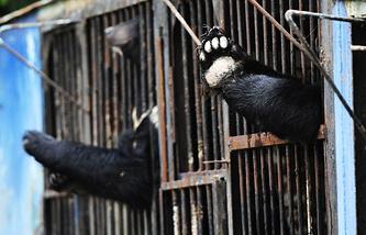 Медведи в вольерах в затопленном зоопарке Уссурийска. 31 августа 2015 года