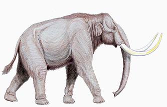 Трогонтериевый слон (степной мамонт)