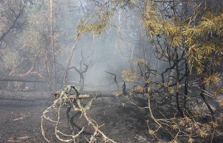 """Пожар в национальном парке """"Куршская коса"""". 24 июля 2014 года"""