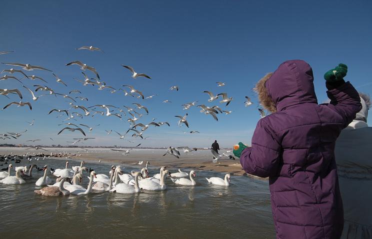 Наозера Алтая вновь прилетели лебеди