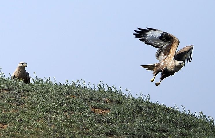 Браконьерство поставило на грань исчезновения многие виды птиц