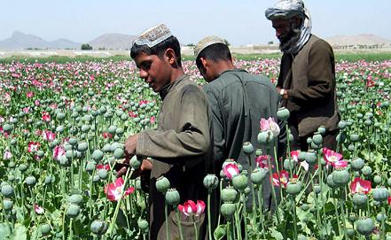 Маковая плантация в Кандагаре (Афганистан), фото EPA/ИТАР-ТАСС