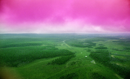 Место падения Тунгусского метеорита, 1989 год. Фото ИТАР-ТАСС