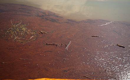 Нефтяное пятно на поверхности Мексиканского залива после взрыва на нефтяной платформе BP. Фото ЕРА/ИТАР-ТАСС